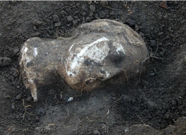 Het 'gezicht van Julia', dat onlangs werd gevonden