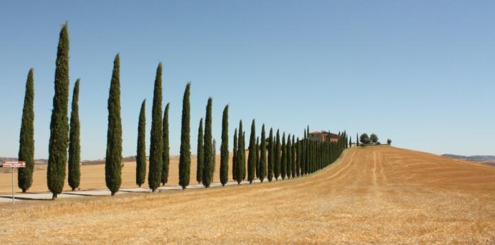 Toscane-cipressen