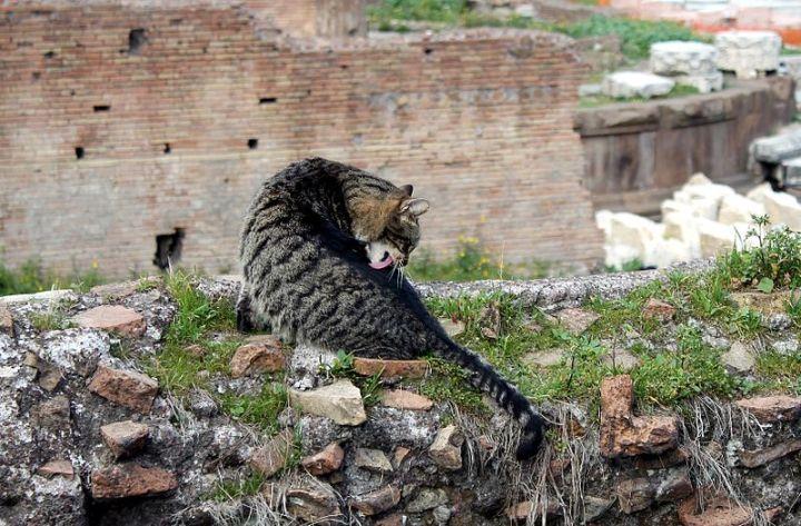 Katten_Largo_di_Torre_Argentina,_Rome